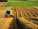 Сельскохозяйственная деятельность- восстановление бухгалтерского  и  налогового  учета