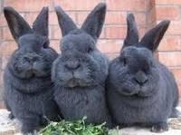 Комбикорм для кроликов от 30кг