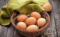 Як обрати якісні яйця?