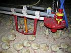 Автоматическая линия поения для индюков, гусей, уток, фото 7