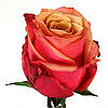 Роза чайно-гибридна Черри бренди