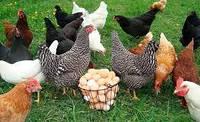 Белковые витаминно-минеральные корма  для  кур несушек  фасовка 30кг.