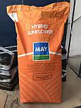 Семена подсолнечника Армада под Евролайтнинг, фото 2