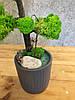 Дерево декоративное из стабилизированного мха, фото 3
