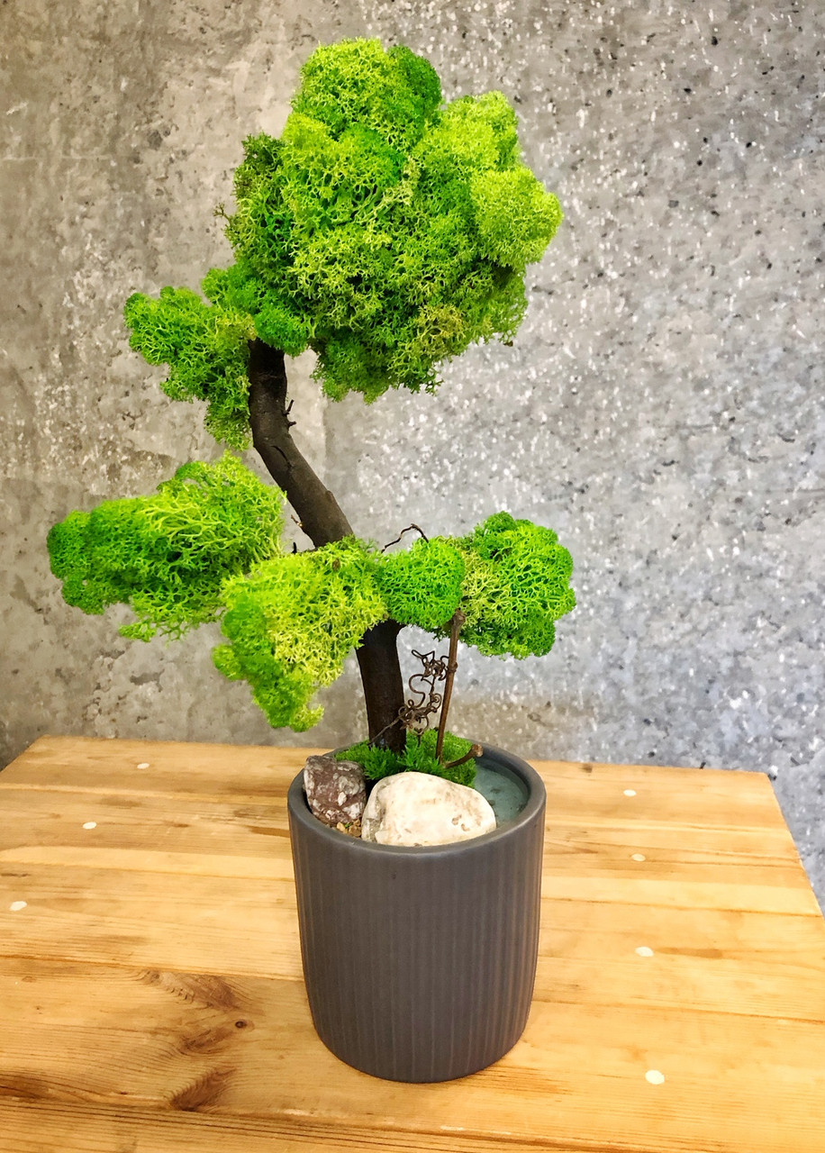 Дерево декоративное из стабилизированного мха