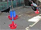 Бункерная кормушка для индюков, гусей, уток Manola-Т, фото 5
