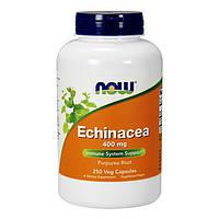 Эхинацея NOW Echinacea 400 mg 250 veg caps