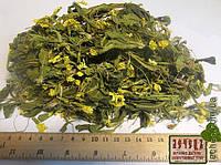 Первоцвет весенний, примула (Primula veris)