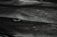 Мех шкурки норка ирис датская Дания Самцы 68-70 см
