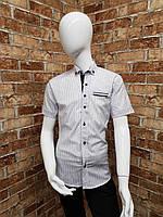 Рубашка подростковаяс коротким рукавомдля мальчика от 12до 16лет белая с тёмно синим, фото 1