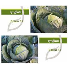 Семена капусты б/к Эпикур F1 (2500 сем.) Syngenta