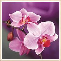 """Алмазная вышивка """"Орхидея"""" (картина своими руками)"""