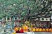 Семена Дерево Бодхи или Священный Фикус, фото 4