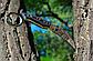 Нож нескладной 2534   MP, фото 4