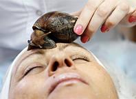 Гігантський равлик ахатін  - ваш домашній косметолог