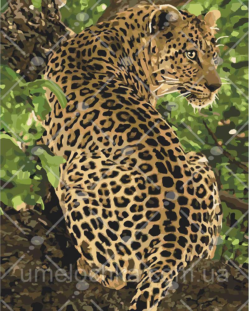 Картина по номерам Леопард на дереве 40 х 50 см (KH4101)