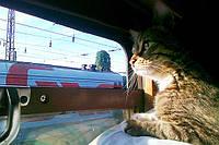 Перевозка кошки в поезде по Украине