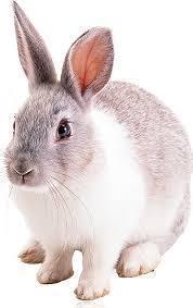 Корм для відгодівлі кролів курей