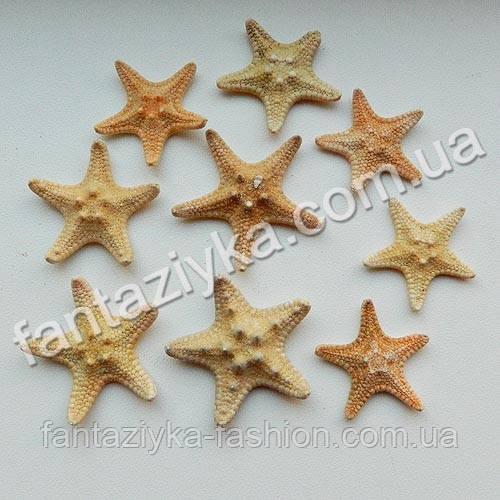 """Натуральная морская звезда """"рино"""" маленькая 3-4см"""