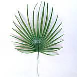 Лист пальмы круглый малый  30 см (20 шт. в уп), фото 3