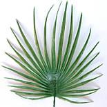 Лист пальмы круглый малый  30 см (20 шт. в уп), фото 2