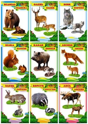 "Комплект карток 9 шт. ""Дикі тварини"" Км.-071"