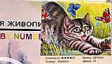"""Алмазная живопись картина """"Котенок"""" (40*30 см) Полная закладка, фото 2"""