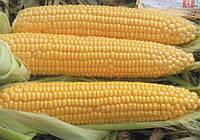 Кукуруза Турбин 5000с, фото 1