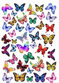 Бабочки 10