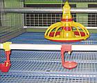 Решетчатый настил для птичников 1000х600 мм, пластиковый пол для птичников, фото 5