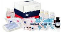 Ingezim ADV Total. Тест-система для серодіагностики специфічних загальних антитіл до вірусу хвороби Ауєскі