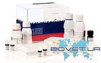 Тест-система для серодиагн. спец. антител к Lentovirus в сыворотке крови методом ИФА (непрямой вариант)