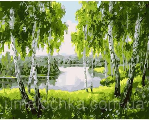 Картина по номерам Березовая роща 40 х 50 см (BRM25867)