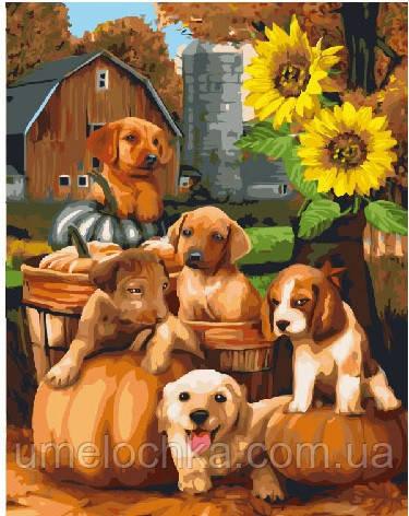Картина по номерам Собачки у подсолнуха 40 х 50 см (BRM21474)