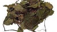 Боровая матка, трава 100 грамм, Ортилия однобокая