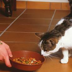 Корма и лакомства для домашних животных и птиц