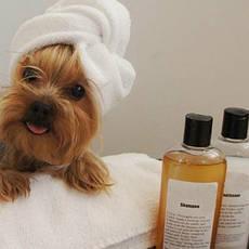 Засоби для гігієни тварин