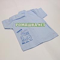Детская кофточка р. 56 короткий рукав кнопки футболка для новорожденных малышей грудничков КУЛИР 3174 Голубой Б