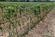 """Набор для капельного полива малины, кустов, деревьев """"Многолетка 100"""" (443 предмета), фото 3"""