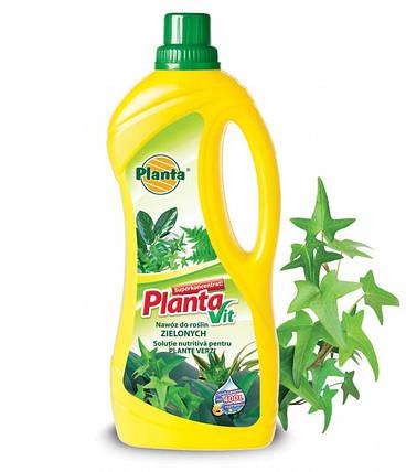 ТМ PLANTA Удобрение для Декоративных растений 250 мл, фото 2