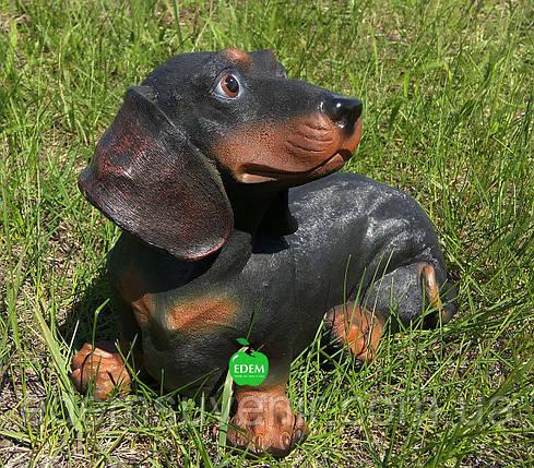 Садовая фигура собака Такса, фото 2