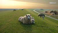 Премикс для овец, коз и баранов, Германия