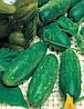 Семена огурца Левина F1 (1000 семян) Levina F1 Seminis (Голландия)
