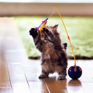 Игрушки для домашних животных