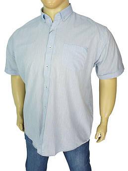 Однотонна чоловіча сорочка Barcotti A: 0139-06 великих розмірів
