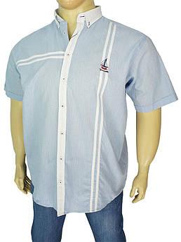Стильна чоловіча сорочка Barcotti A: 0152-02 великих розмірів