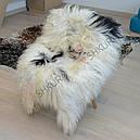 Шкура овцы исландской породы бело-черного цвета 02, фото 2