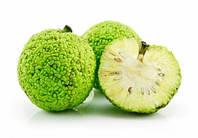 """Адамово яблоко"" семена  (маклюра, в упаковке 30 шт)"