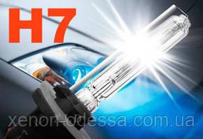 Лампа ксенон H7 6000K 35W AC, фото 2