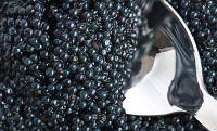 Чёрная икра веслонос 300 грамм
